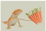 Can Bearded Dragons Eat Carrots?