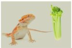 Can Bearded Dragons Eat Celery?
